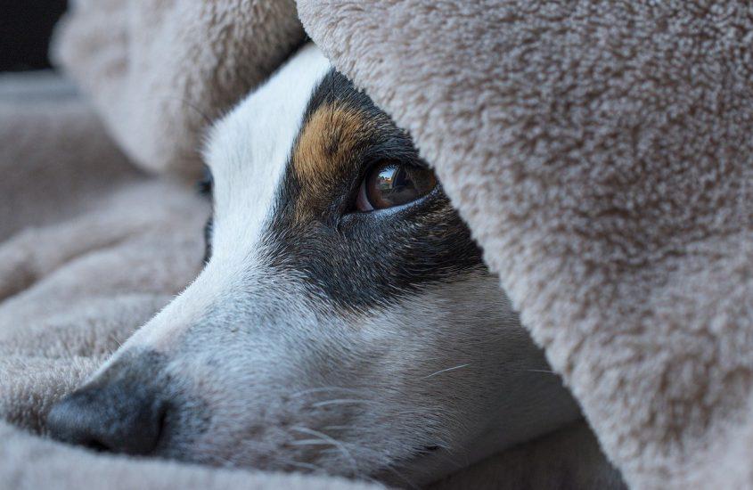 Alles wat je wilt weten over hondenkussens